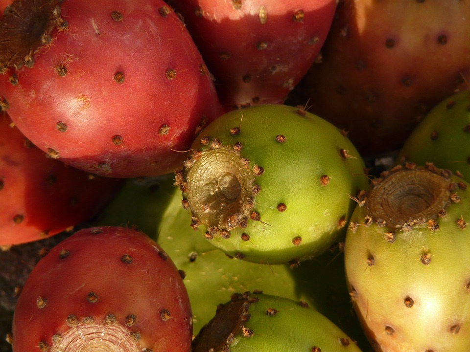 prickly-pear-9383_960_720